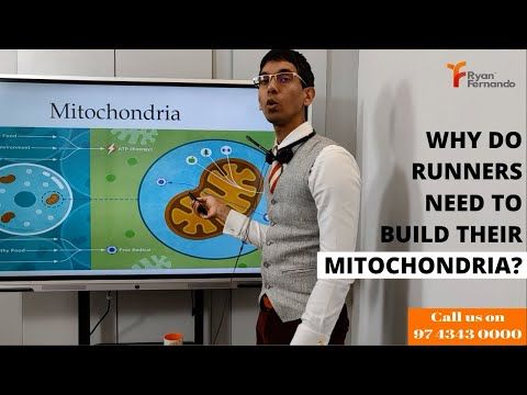 Why do runners need to build their Mitochondria? l Runner's diet plan l Running Nutrition l