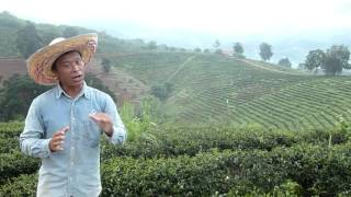 Talking Tea - A history of the Tea Plantation