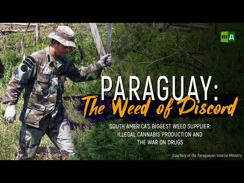 Paraguay: The Weed