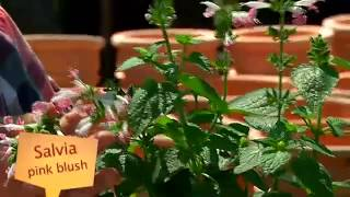 Gardening Tips with Tanya Visser -   Companion Plants for Roses