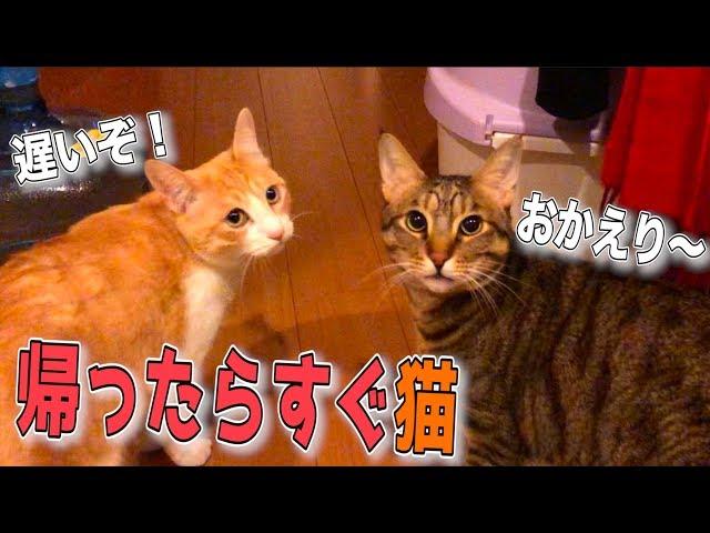 大阪から終電で帰ってきたら猫が玄関で出待ちしていた