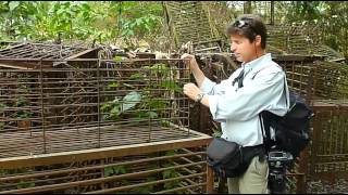 Cages used in Moon Bear farming (Catt-Trax 3)