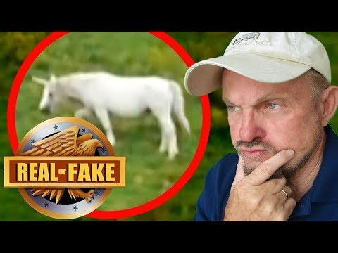ARE UNICORNS REAL?  + 4 more 'Real or Fake?' Pictures