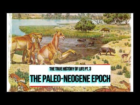PaleoMania ep. 3 - The True History of Life: The Paleo-Neogene Era