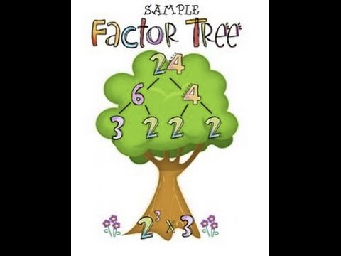 Prime Factorization Lesson 1 2 Go Math Youtube
