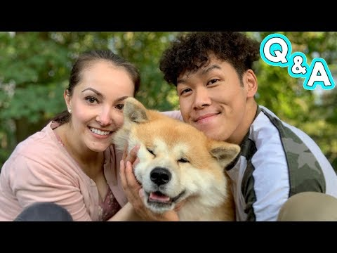 AKITA INU - Q&A Livestream With Yuki And His Owners | 秋田犬