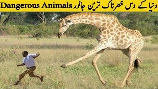 Top Ten most Amazing Animals of The World | Most Dangerous Creatures of the World |