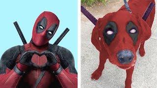 Gerçek Hayatta Var Olan 6 Süper Kahraman Köpek