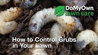 How to Control Grubs in Your Lawn