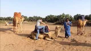 Dromadaire au Maroc