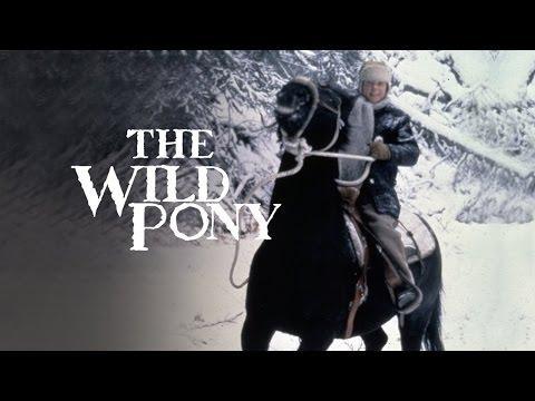 The Wild Pony  HD