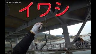 大阪の海釣り公園とっとパークの展望デッキ下でイワシとアジが入れ食い...
