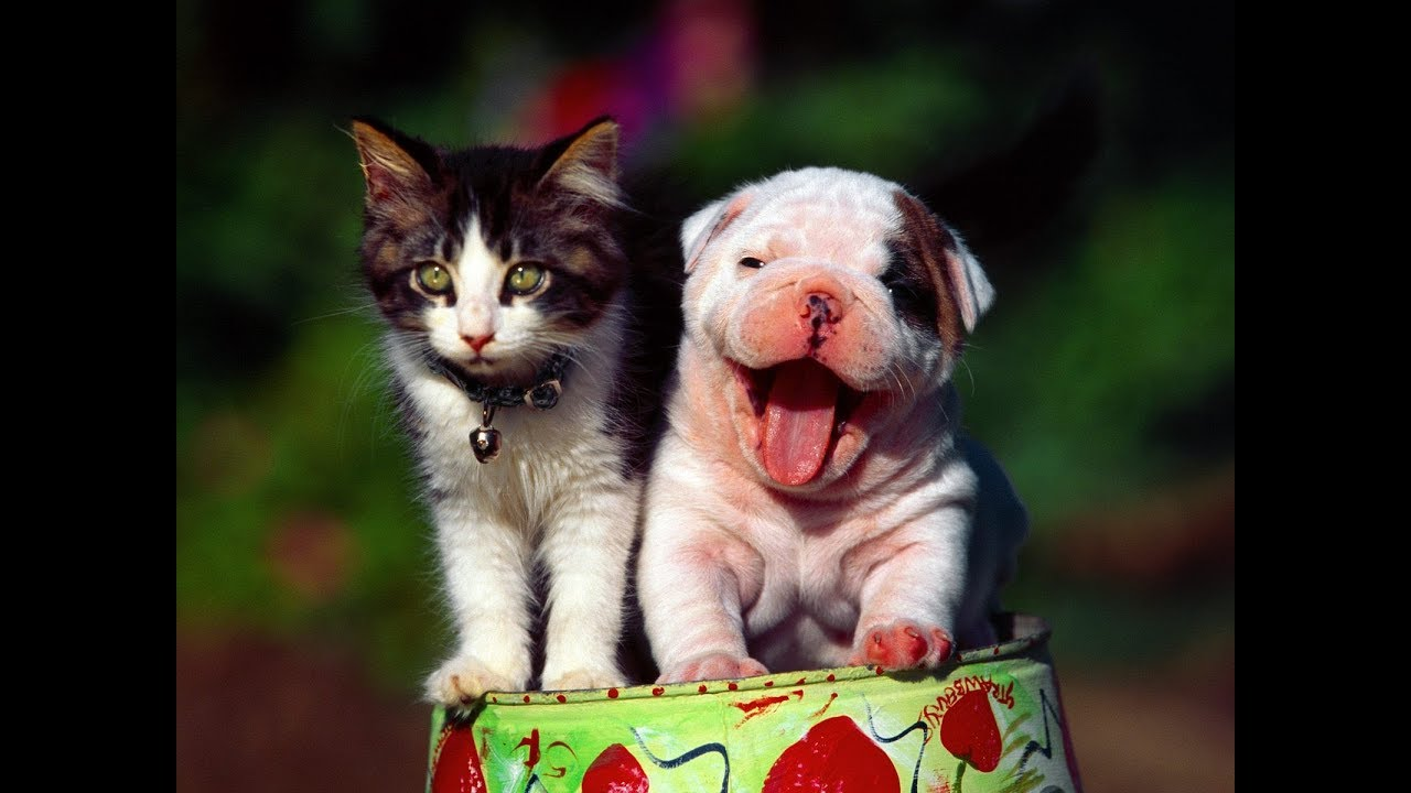 Лучшие приколы про собак и кошек | Подборка видео приколов ...