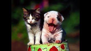 Лучшие приколы про собак и кошек | Подборка видео приколов про милых котиков и собак #2
