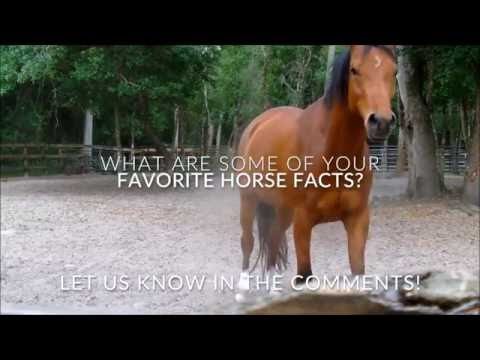 10 Interesting Facts About Horses By Dr Cesar Parra Youtube