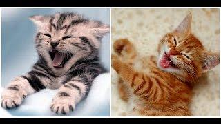 Смешные Котята / Funny kittens / Забавная Видео Подборка/