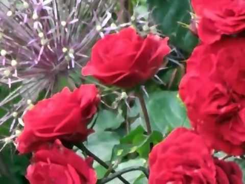 Derbmandvon — kisi din adnan sami mp3 songs download.