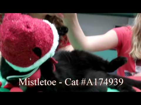 osceola-county-fl-pets-of-the-week---prancer,-dancer,-and-mistletoe