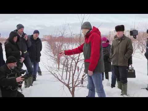 Обрезка вишни и черешни 2019 (мастер-класс).