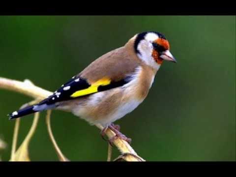 Pour faire le portrait d 39 un oiseau youtube - Comment faire fuir les oiseaux ...