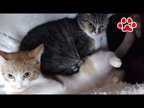 Cats are scary 【Cat's room Miaou】