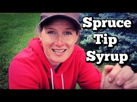 How I Make Spruce and Fir Tip Syrup | Easy and Economical