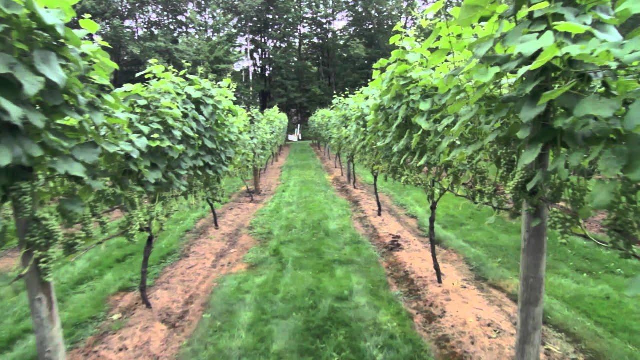 visit a nh winery stone gate vineyard youtube