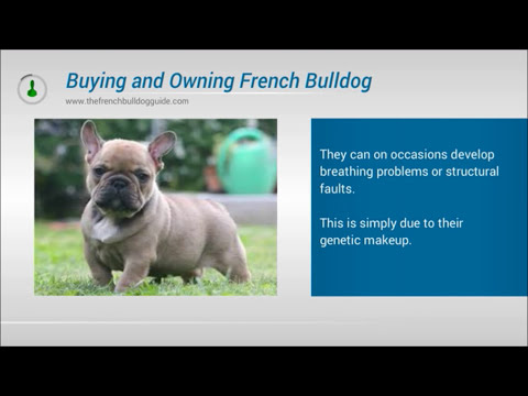 Think Before Buying & Owning a French Bulldog