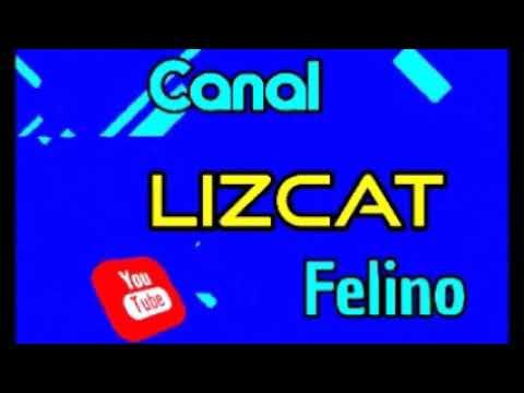 Trailer Lizcat