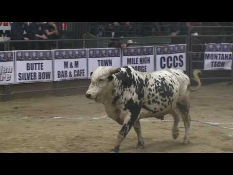 Elite Professional Bullrider Finals Saturday Night 2017
