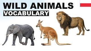 Angielskie słówka w obrazkach - Dzikie zwierzęta 1 (Wild animals)