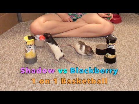 Shadow vs Blackberry - 1 on 1 Basketball