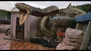 Rắn hổ mây nửa tấn: Kỳ 9; Đội kiểm lâm phải bỏ chốt vì rắn khổng lồ