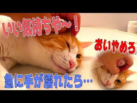 急に濡れた手で猫を撫でても気づかないか検証した結果…www