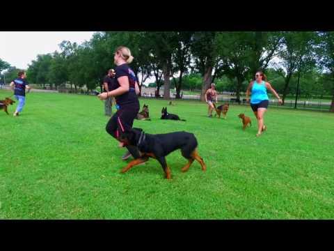 6-Year Old German Shepherd, Ava!  German Shepherd Dog Training | Best GSD Dog Training