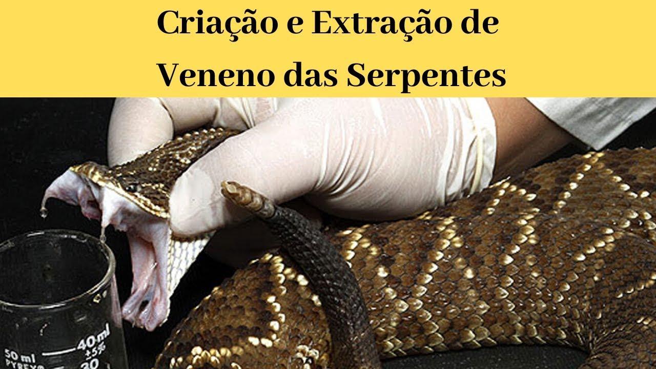 Criação e Extração de Veneno das Serpentes