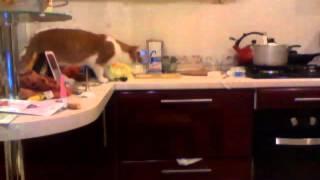 Как навсегда отучить кота лазить по столу!