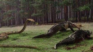 crocodile anaconda 5 killing anocanda