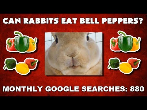 Can Rabbits Eat Bell Peppers Funny Animal Videos
