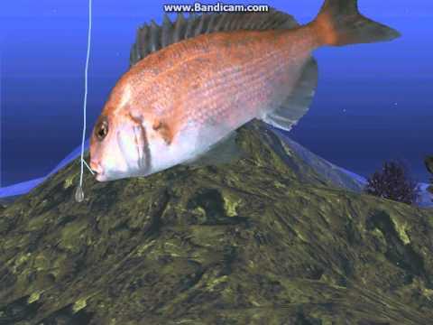 Red Seabream - Reel Fishing II Part 24