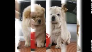 корм для собак purina(, 2014-10-20T18:53:13.000Z)