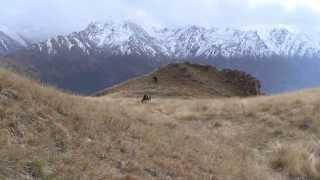 В горах Кабардино-Балкарии(Эльбрусский охотучасток ФГБУ