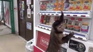 Чем человек отличается от обезьяны при приобретении товара?