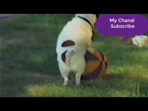 Most Funny cat and dog - funny cats and dogs - funny cats vs dogs - funny animals compilation