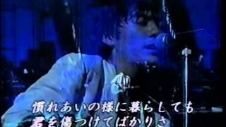 小学生の頃からデビューまでの生い立ち、 南野陽子・白井貴子が尾崎との...