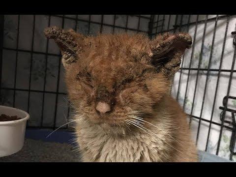 Из-за болезни котик не мог открыть глаза, он отчаянно мяукал, в надежде, что его спасут
