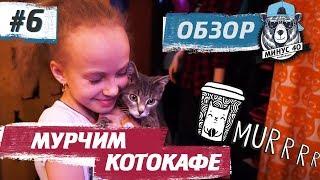 КОТОКАФЕ МУРЧИМ в Новосибирске - Вкусное печенье, чай, добрые коты | МИНУС 40