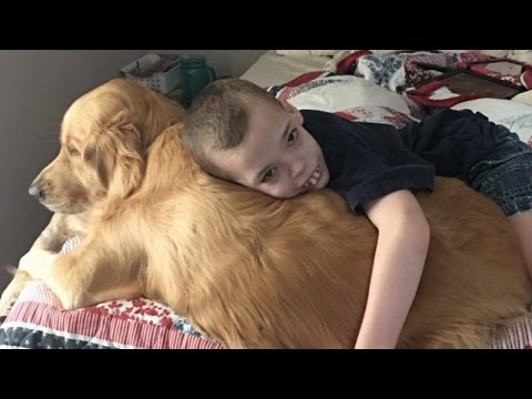 Boy's Life-Saving Golden Retriever Detects His Seizures Before They Happen