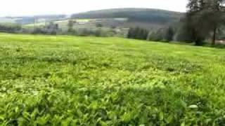 Kericho Kenya Tea Plantation by HoboTraveler.com