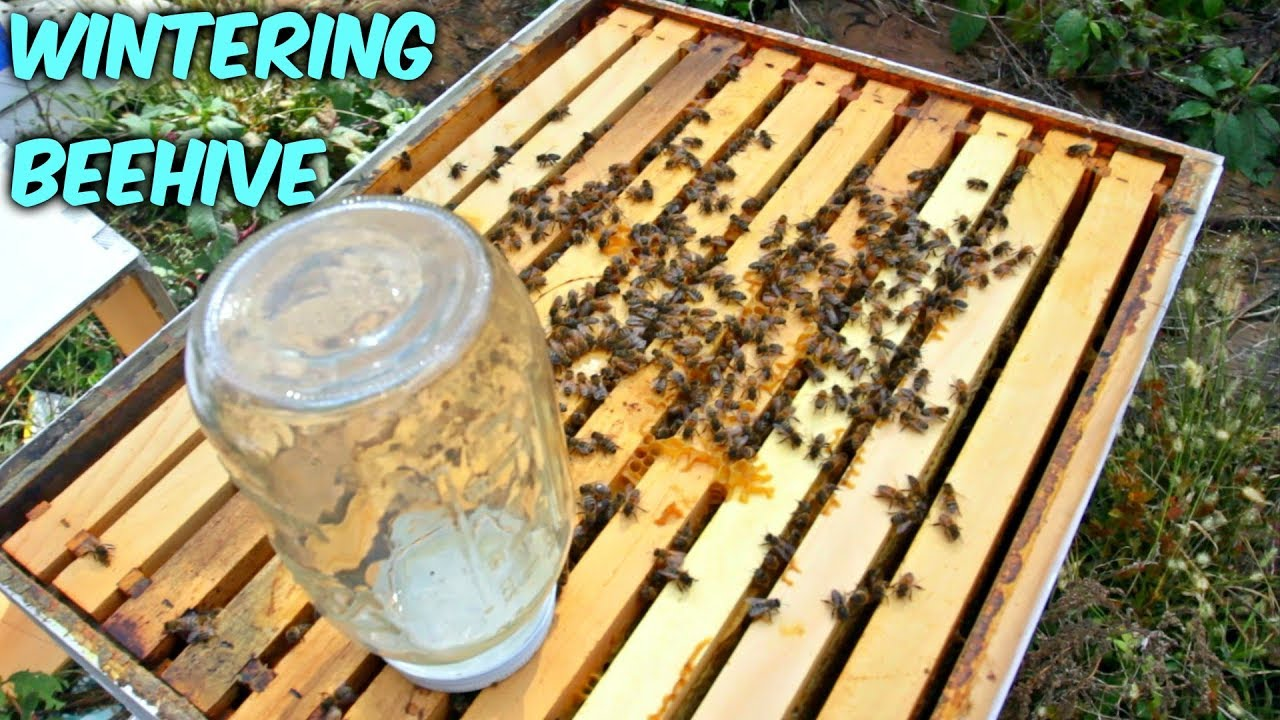 wintering-bees-got-mice-in-a-beehive